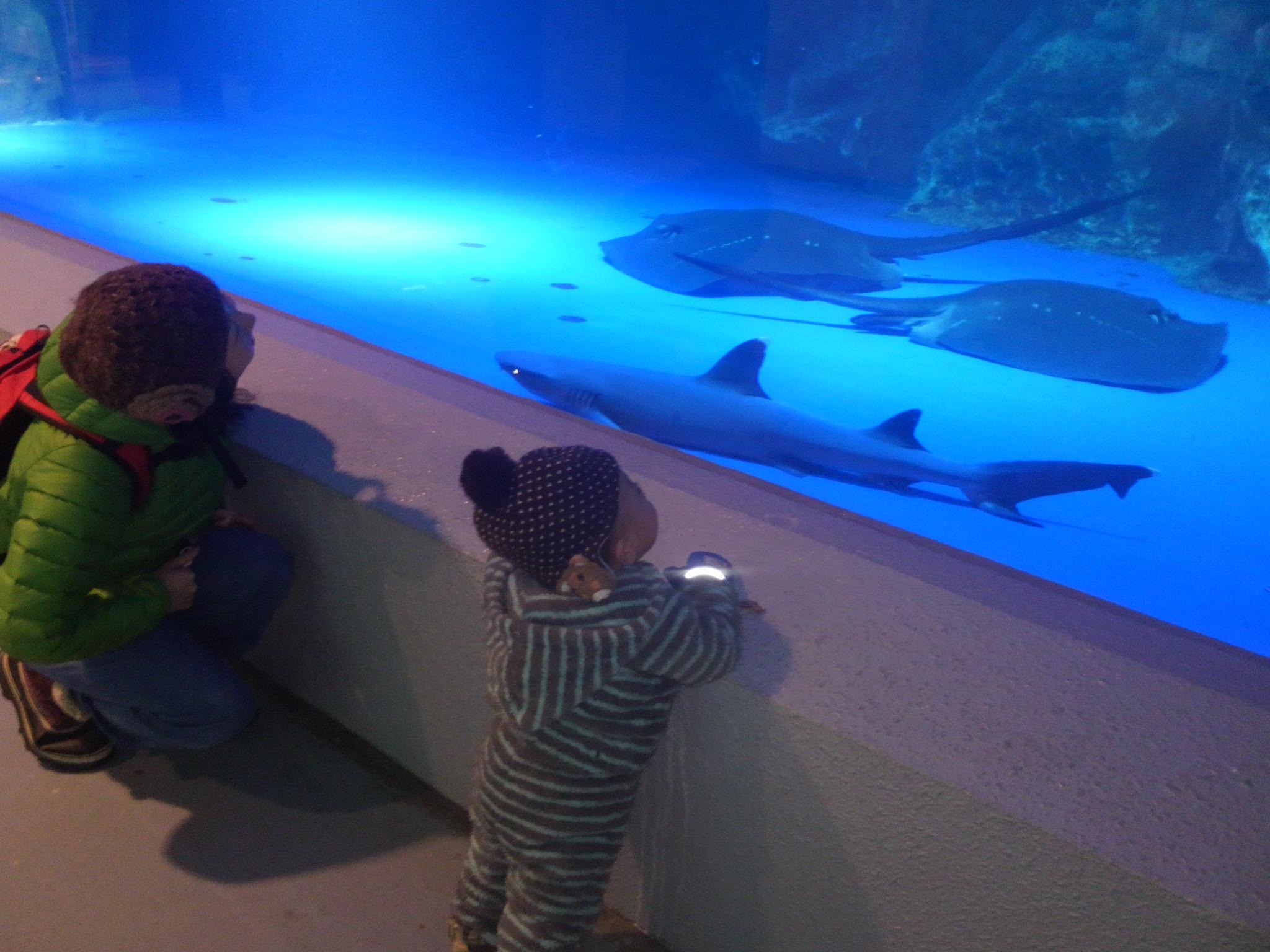 otaru-aquarium