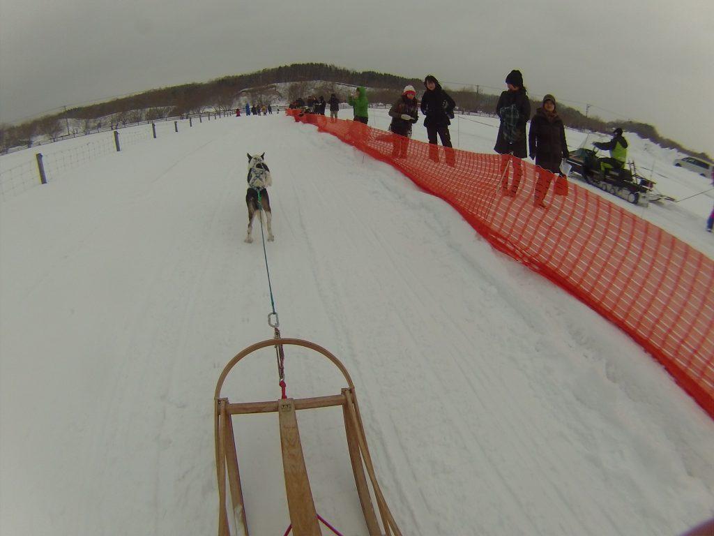 eniwa-dog-sled-race5