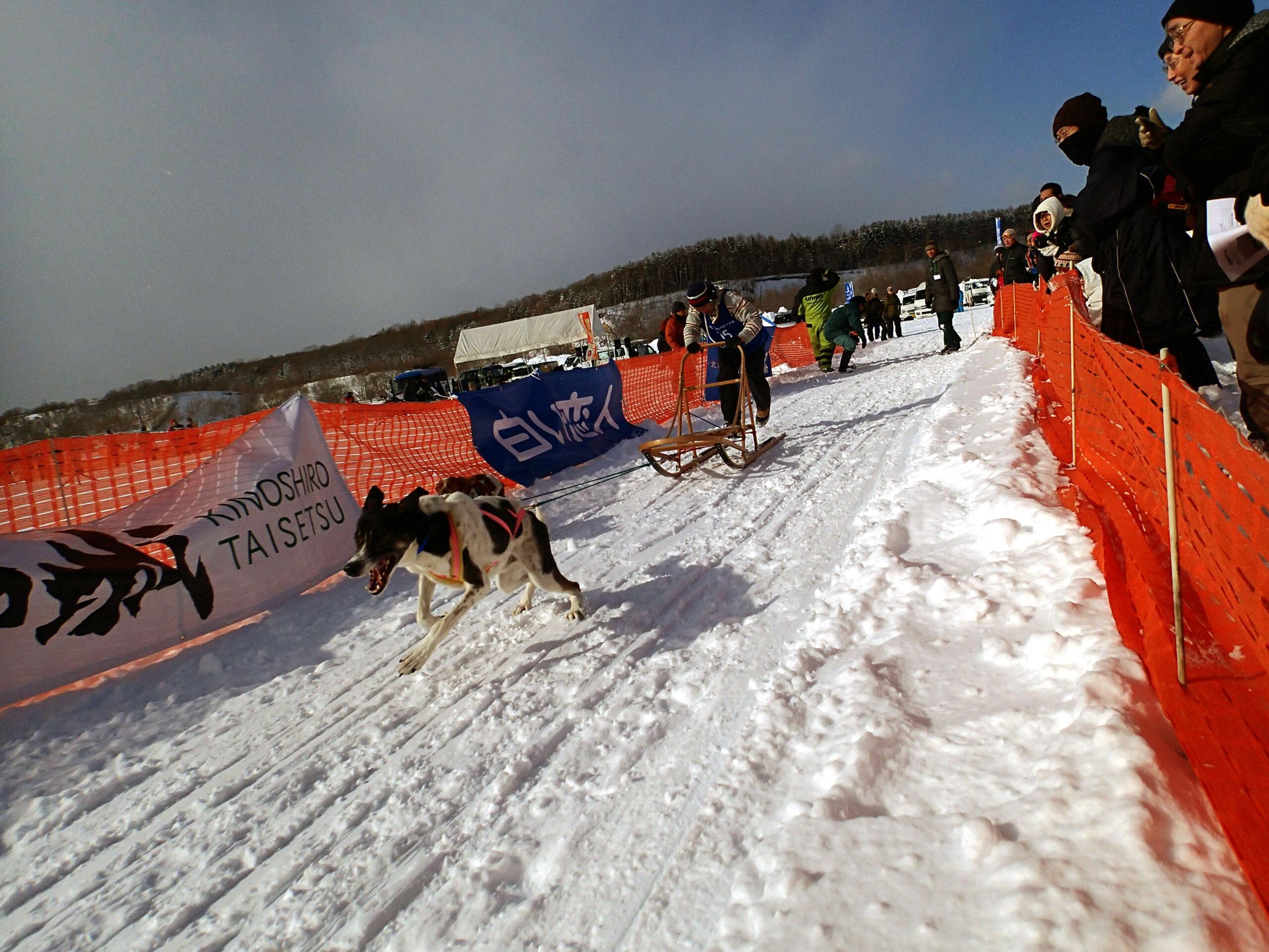 eniwa-dog-sled-race