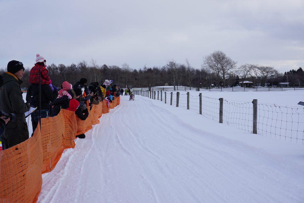 eniwa-dog-race2
