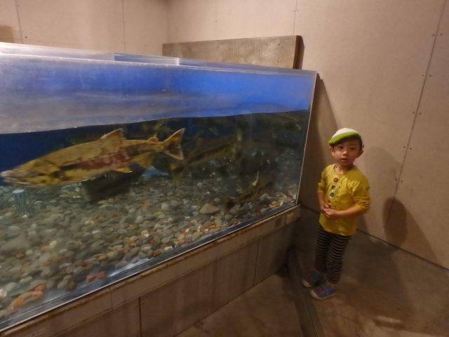 salmon-trout-info-center2