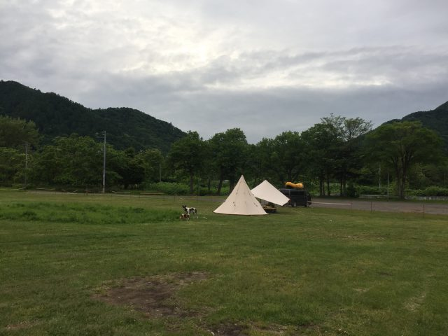 camp-with-dogs