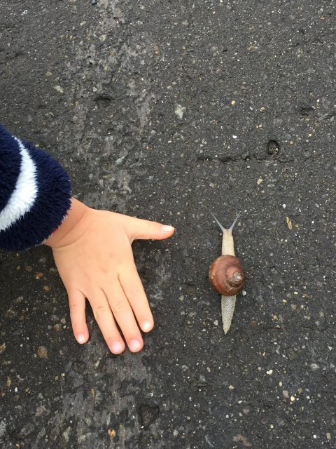 big-snail