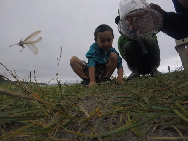 catching-grasshopper-2