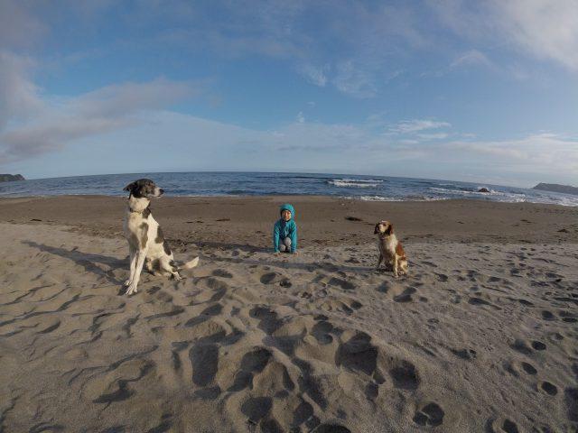 dogs-mame-buri1