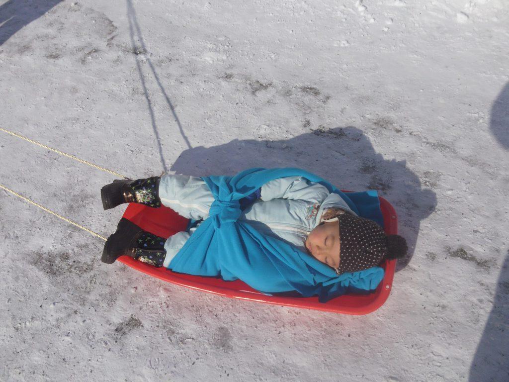 eniwa-dog-sled-race4