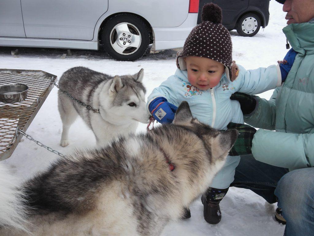 eniwa-dog-sled-race3